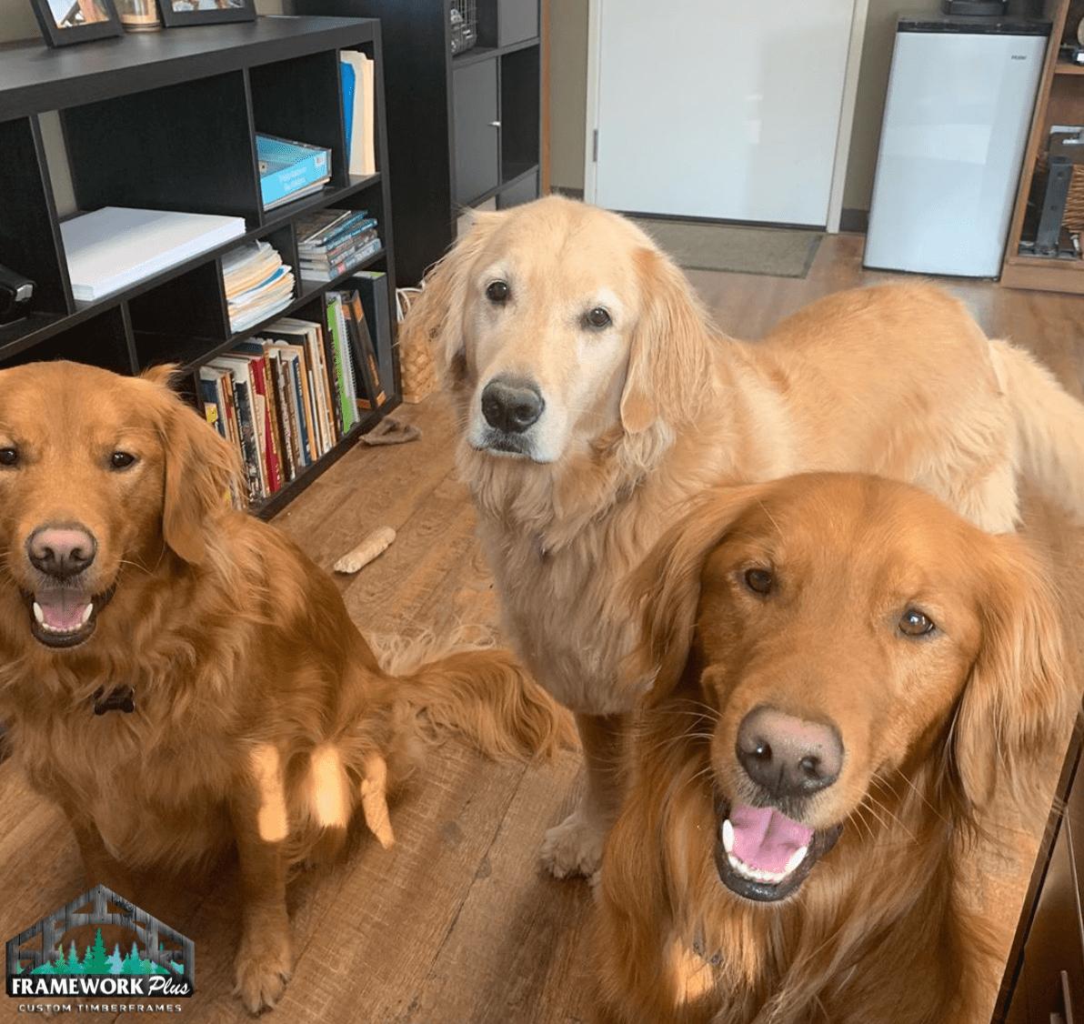Frame Work Plus Pups